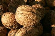 Persian Walnut nuts