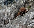 Walruswalrus.jpg