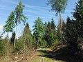 Wanderweg zwischen Erzgrube und Jägerplatz.jpg