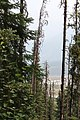 Wapta Falls Trail IMG 4994.JPG