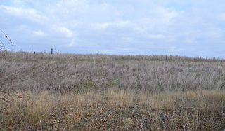 Warboys Clay Pit