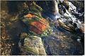 Water stream 04.JPG