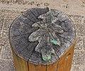 Waterloopbos. Natuurgebied van Natuurmonumenten. Bezoekerscentrum 010.jpg