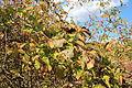 Weingarten im Herbst 5634.JPG