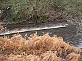 Weir on the River Colne, Golcar - geograph.org.uk - 628606.jpg