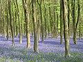 West Woods - geograph.org.uk - 419311.jpg