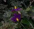 Whf purple 01.jpg