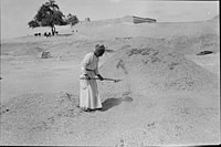 Winnowing at Gezer, Oct. 1934 LOC matpc.22242.jpg