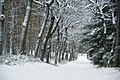 Winter in the Netherlands (5464353107).jpg