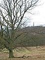 Winter tree near Eastnor Park. - geograph.org.uk - 646400.jpg