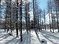 Winterwald - panoramio (1).jpg