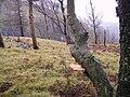 Woodland, Bell Rake - geograph.org.uk - 337848.jpg