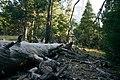 Yosemite, California (29972674477).jpg