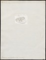 Zamenis viridiflavus - kop - 1700-1880 - Print - Iconographia Zoologica - Special Collections University of Amsterdam - UBA01 IZ12100169.tif