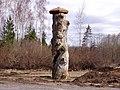 Zauskas priedes stumbra daļa 2007-04-06 - panoramio.jpg