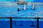 Zoo de Lisboa by Juntas 17.jpg