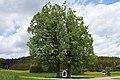 Zwei Sommerlinden bei Bruderndorferwaldhäuser 03 2015-05 NDM ZT-132.jpg