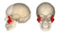 Zygomatic bone.png