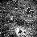 """Labrce"" (pasti) v Sabadinih na njivi (s semenskim radičem) 1950.jpg"