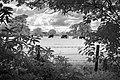 """""""Pasture"""" (30751863214).jpg"""