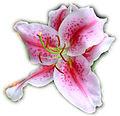 (151) Orchid02.jpg