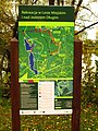 (PL) Polska - Warmia - Ścieżka nad jeziorem Długim w Lesie Miejskim w Olsztynie - Path on the Long Lake in the City Forest in Olsztyn (9.X.2012) - panoramio (1).jpg
