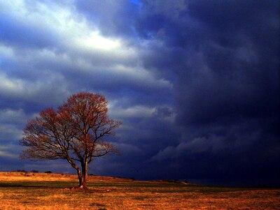Árbore afrontando treboada