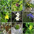 Šumiac-Kráľova hoľa-flóra - panoramio.jpg