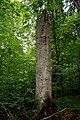 Žofínský prales 1.jpg