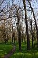 Голопристанський акацієвий ліс, південна околиця.jpg