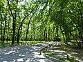 Голосіївський парк імені Максима Рильського в Києві.jpg