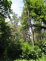 Дендрологічний парк 15.jpg