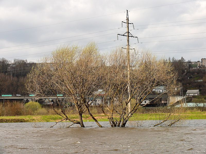 File:Деревья в воде - panoramio - Machmood.jpg