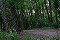 Личаківський парк 04.jpg