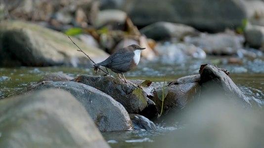 File:Прону́рок на річці.webm
