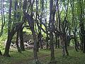 Руїни у Підгорецькому парку.JPG