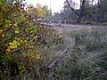 Рэшткі пад'язнога пуці - panoramio.jpg