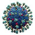Сoronavirus. SARS-CoV-2.jpg