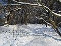 Украина, Киев - Голосеевский лес 161.jpg