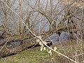 Украина, Киев - Голосеевский лес 43.jpg