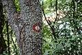 Шумска маркација ка видиковцу Плоче.jpg