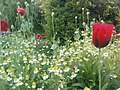 باغ گلها - panoramio.jpg