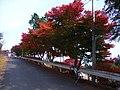 ときがわ町立堂平天文台 - panoramio.jpg