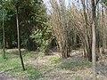 竹叶海公园 隆冬刚去,一片萧瑟。 - panoramio.jpg
