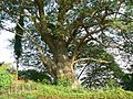 ... at Hanging Gardens (1814701942).jpg