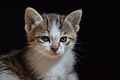 1-month-old kittens 32.jpg
