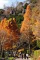 121208 Nunobiki Herb Garden Kobe Hyogo pref Japan03s3.jpg