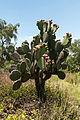 15-07-13-Teotihuacán-RalfR-N3S 9273.jpg