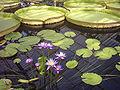 160604 kew-gardens-waterlily-house 3-640x480.jpg