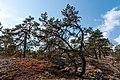 18-09-01-Schären westlich von Långbådan RRK7712.jpg